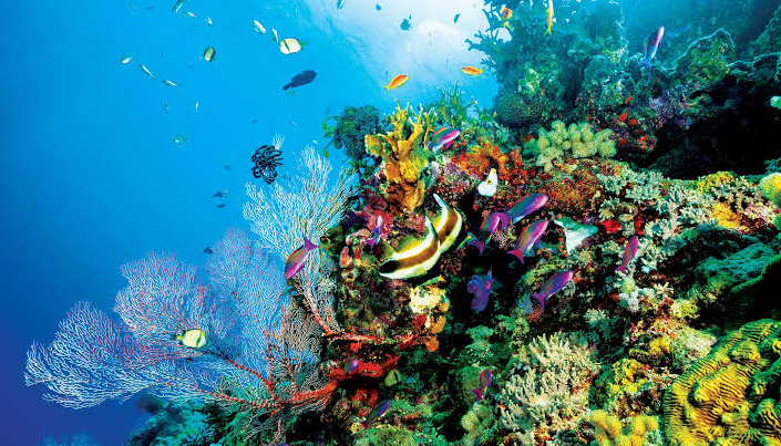 The Great Barrier Reef, the Largest Living Thing on Earth